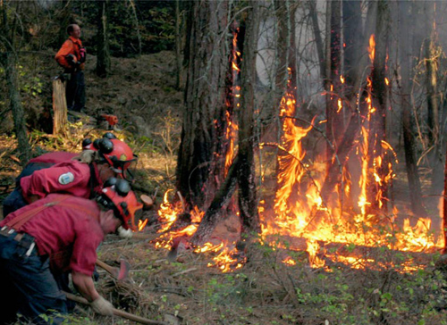 Fire fighters in BC forest